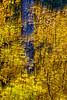 00006-EAST SIERRA 10-16-11 D1 8740
