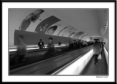 Ref #7957-1N photo © LenScape Photography