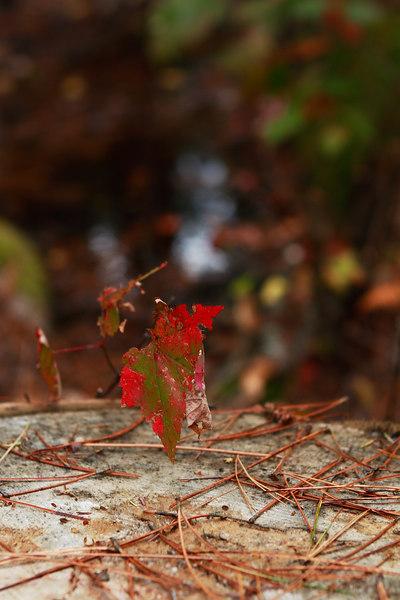 this was one fantastic leaf