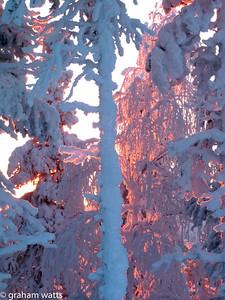 red_light_pines_detail