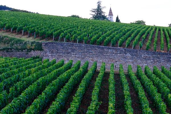 Vineyard near Nuits Saint-Georges