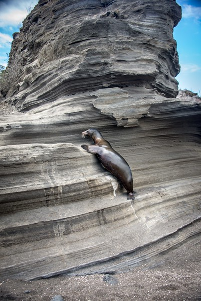 adventuresome sea lion on  Puerto Egas