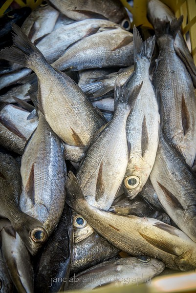 fish market catch
