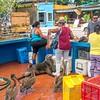 fish market, Puerto Ayora, Santa Cruz Island