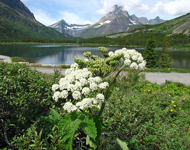 Glacier National Park, Montana (6)