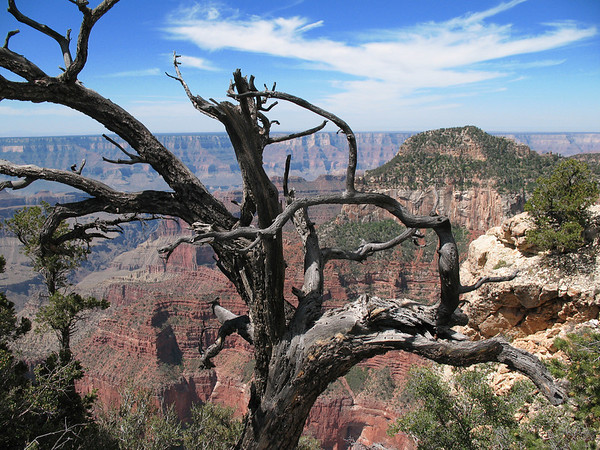 Grand Canyon, Arizona (8)