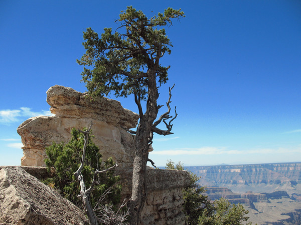 Grand Canyon, Arizona (7)