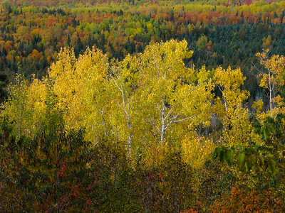 Fall Colors at Grand Marais MN  2012 Sep