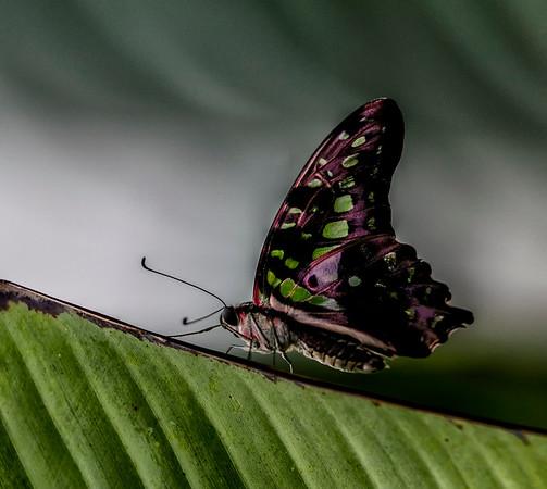 USA; Michigan; Mackinac Island; Wings of Mackinac butterfly conservatory