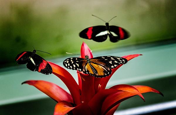 Mackinac Island; Michigan; Surrey Hill; USA; Wings of Mackinac butterfly conservatory