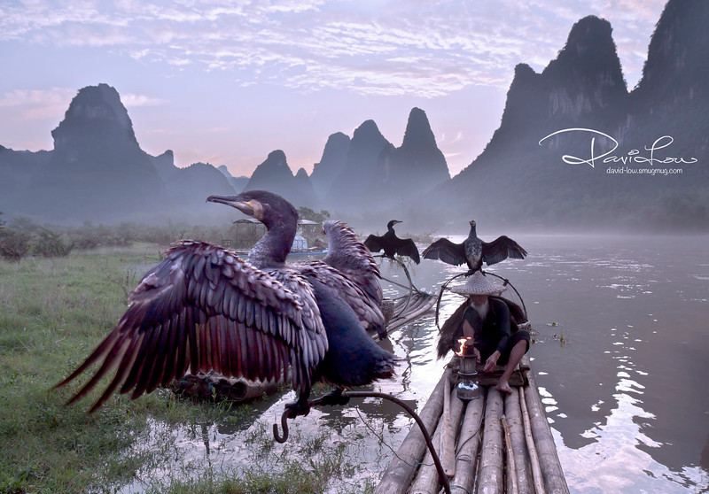 The cormorant has a habit of spreading their wings to dry