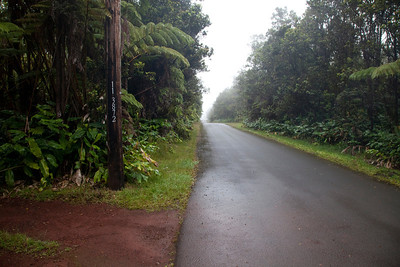 9th Street at Tree Fern House near Volcano IMG_0880