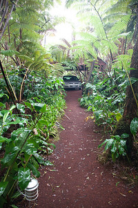 Driveway at Tree Fern House near Volcano IMG_0881