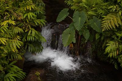 Akaka Falls State Park IMG_8462