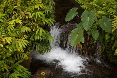 Akaka Falls State Park IMG_8463