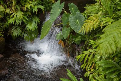 Akaka Falls State Park IMG_8466