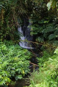 Akaka Falls State Park IMG_8464