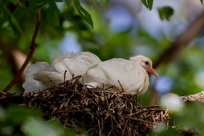 White Pigeon IMG_8457