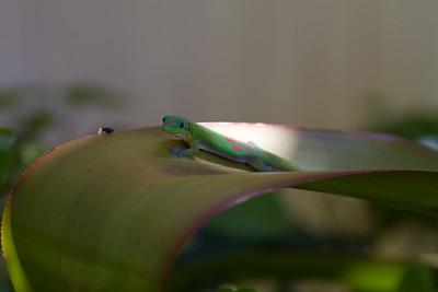 Gecko IMG_8764