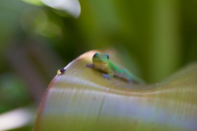 Gecko IMG_8765