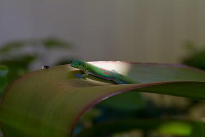 Gecko IMG_8763