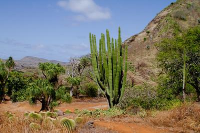 Koko Crater Botanical Garden IMG_8645