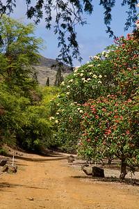 Koko Crater Botanical Garden IMG_8629