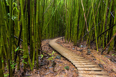 Bamboo Forest Park