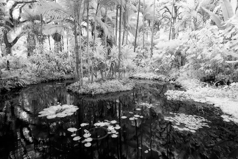 Hawaii Tropical Botanical Garden