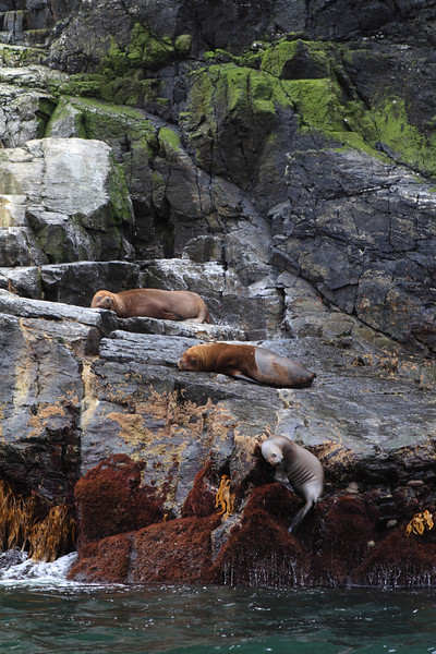 This is off the coast of Chile in a National Marine Reserve - lots of sea lions