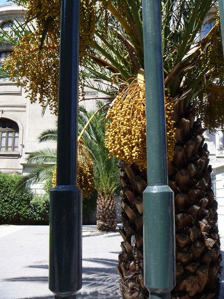 Still outside the national library.  Is that a giant acorn or pine cone?