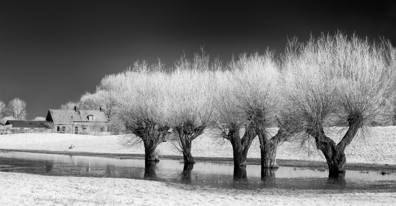 Trees in the water in an ancient village
