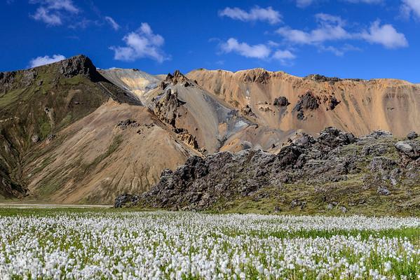 Cotton field Landmannalaugar