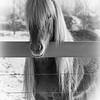 Icelandic horse 253