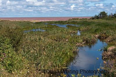 Wetlands PEI