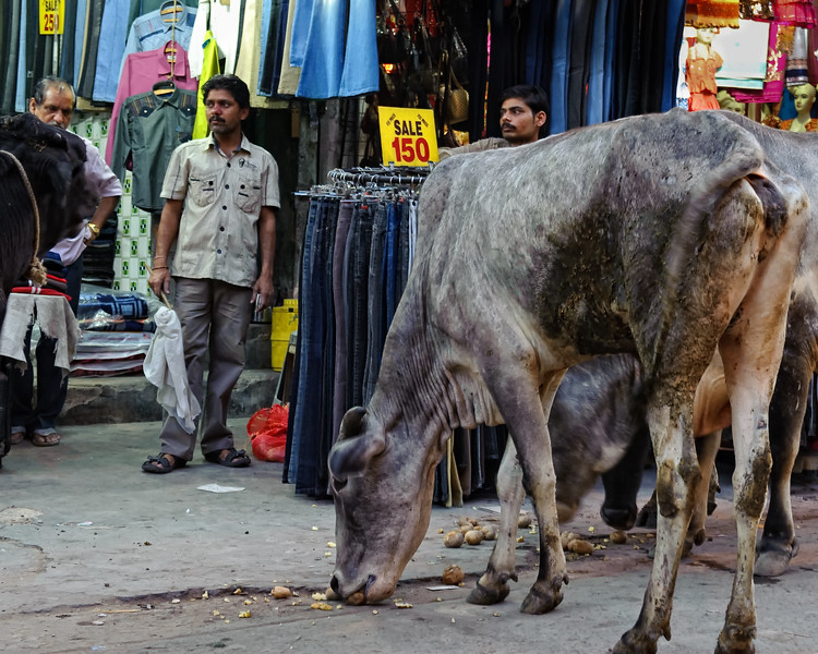 Cows shopping at Main Bazaar road, Delhi