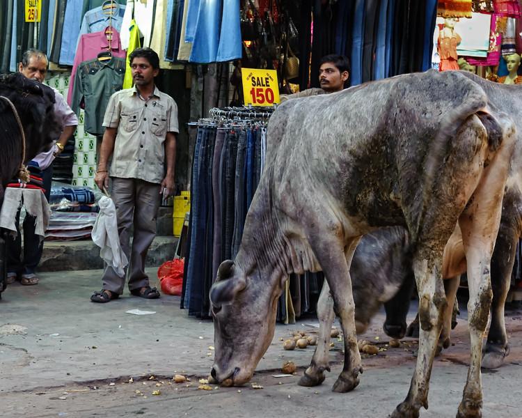 Cows shopping at Main Bazaar road, Delhi