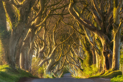 The Fairy Road