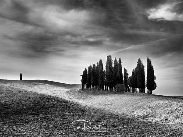 Unmistakeable trees of Tuscany