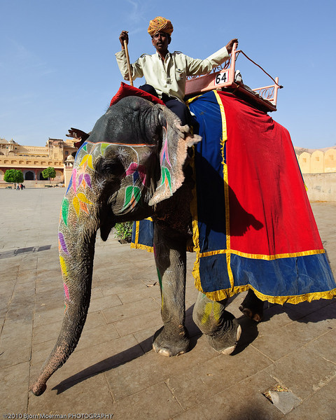 Elephant rides to the Amber Fort
