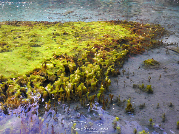 Beautiful algae - Five Flower Lake is very mysterious because it never freezes on winter even when other lakes all become frozen.