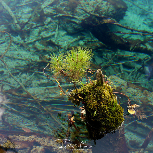 An underwater test shows that Five Flower Lake is so clear that one can see as far as 40 meters when under its surface.