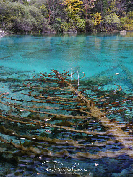 The lakes sometimes turns to goose-feather yellow, sometimes it turns to ink-green, but most of the time it is clear diamond-blue.  The multi-coloured lake bottom is often criss-crossed by ancient fallen tree trunks.