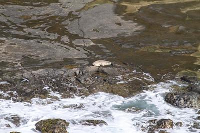 Monk Seal IMG_0634