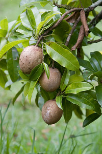 Avocado IMG_2402