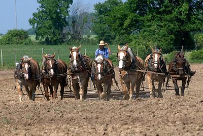 Kenton Amish country