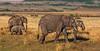 KENYA 09 D4A 5706