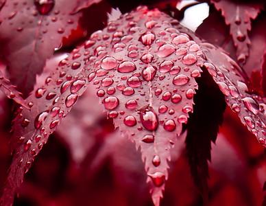 Rainy day in Ketchikan, Alaska
