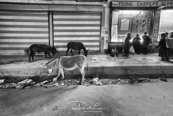 Leh - donkeys and human mixing on the street