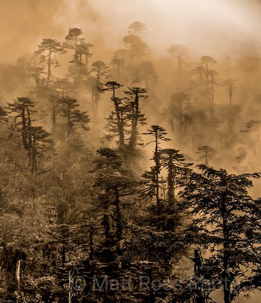 NEAR CHELE LA PASS, BHUTAN
